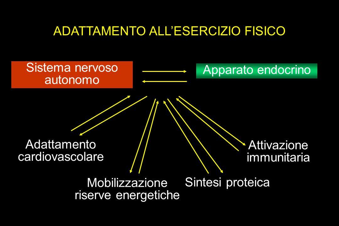 ADATTAMENTO ALLESERCIZIO FISICO Sistema nervoso autonomo Apparato endocrino Adattamento cardiovascolare Mobilizzazione riserve energetiche Sintesi pro