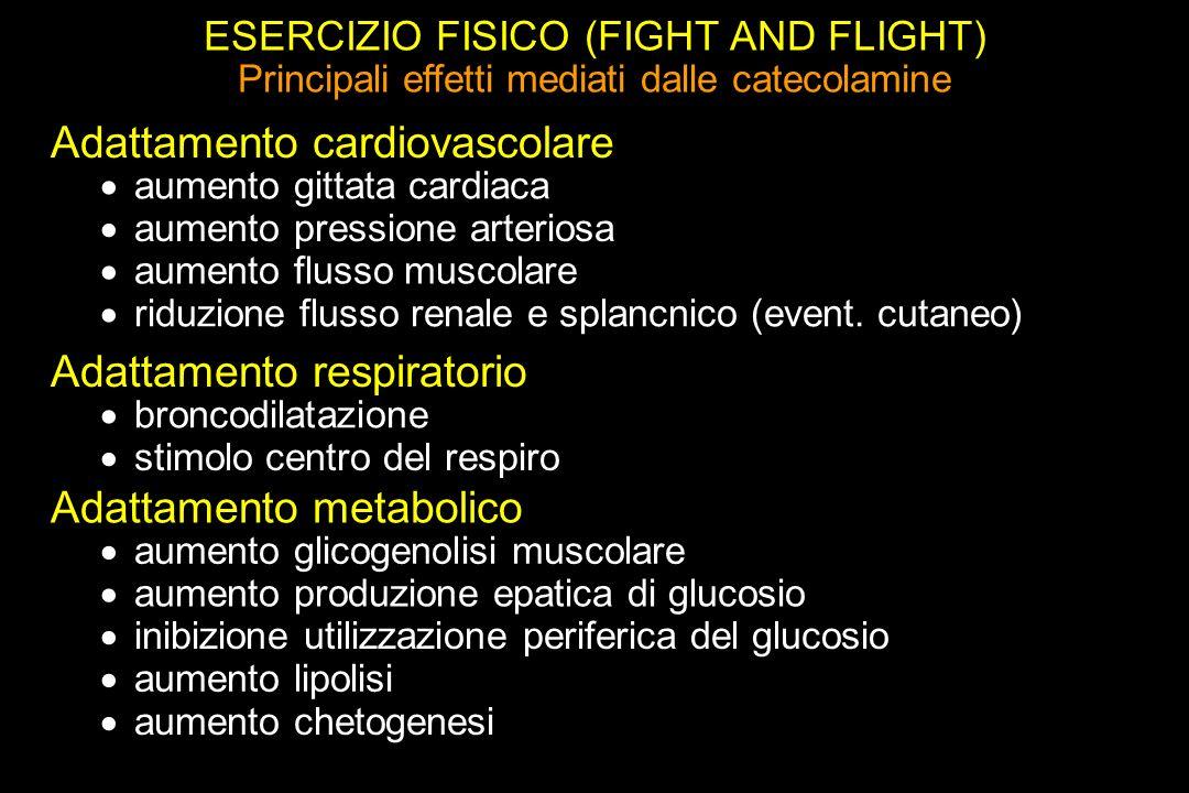 ESERCIZIO FISICO (FIGHT AND FLIGHT) Principali effetti mediati dalle catecolamine Adattamento cardiovascolare aumento gittata cardiaca aumento pressione arteriosa aumento flusso muscolare riduzione flusso renale e splancnico (event.