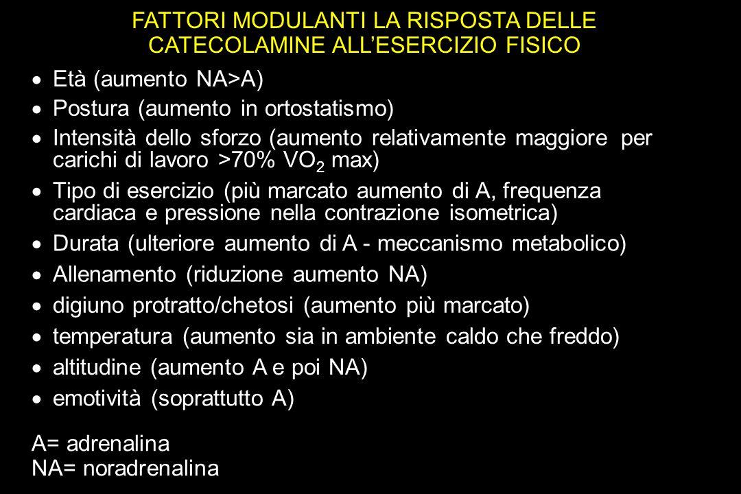 FATTORI MODULANTI LA RISPOSTA DELLE CATECOLAMINE ALLESERCIZIO FISICO Età (aumento NA>A) Postura (aumento in ortostatismo) Intensità dello sforzo (aumento relativamente maggiore per carichi di lavoro >70% VO 2 max) Tipo di esercizio (più marcato aumento di A, frequenza cardiaca e pressione nella contrazione isometrica) Durata (ulteriore aumento di A - meccanismo metabolico) Allenamento (riduzione aumento NA) digiuno protratto/chetosi (aumento più marcato) temperatura (aumento sia in ambiente caldo che freddo) altitudine (aumento A e poi NA) emotività (soprattutto A) A= adrenalina NA= noradrenalina