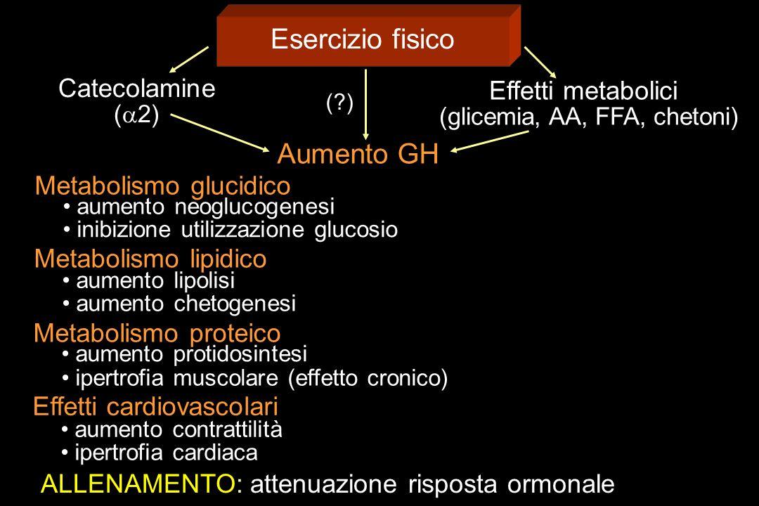 Esercizio fisico Catecolamine ( 2) Effetti metabolici (glicemia, AA, FFA, chetoni) Aumento GH Metabolismo glucidico aumento neoglucogenesi inibizione
