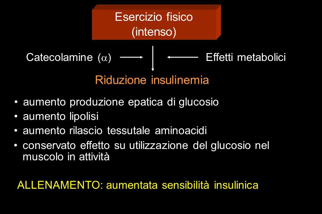 Esercizio fisico (intenso) Catecolamine ( ) Effetti metabolici Riduzione insulinemia ALLENAMENTO: aumentata sensibilità insulinica aumento produzione epatica di glucosio aumento lipolisi aumento rilascio tessutale aminoacidi conservato effetto su utilizzazione del glucosio nel muscolo in attività