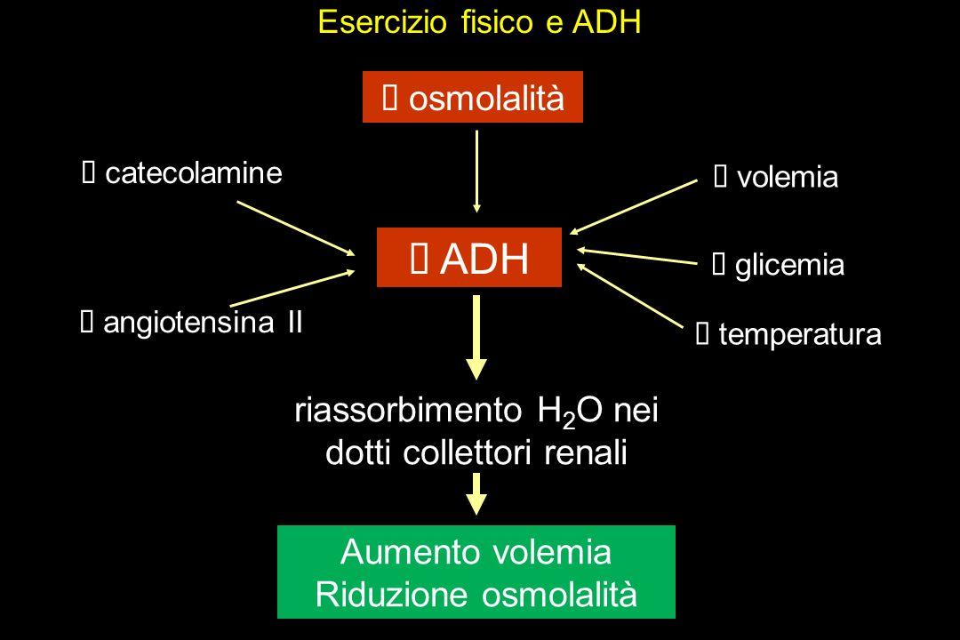 Esercizio fisico e ADH osmolalità ADH riassorbimento H 2 O nei dotti collettori renali Aumento volemia Riduzione osmolalità volemia temperatura glicemia catecolamine angiotensina II