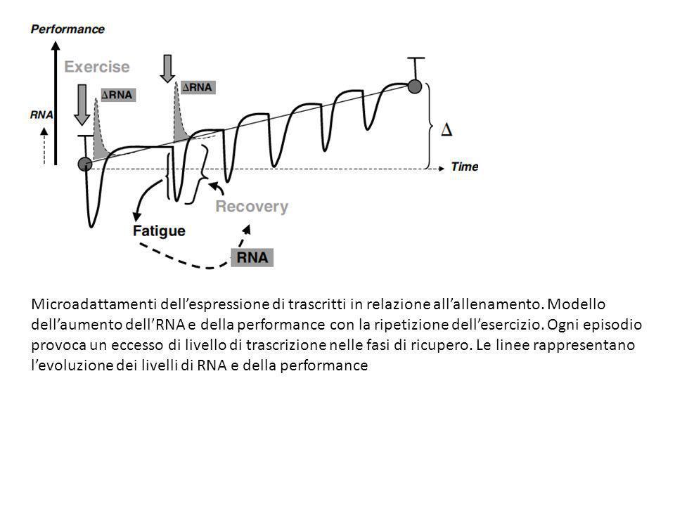 Microadattamenti dellespressione di trascritti in relazione allallenamento. Modello dellaumento dellRNA e della performance con la ripetizione dellese