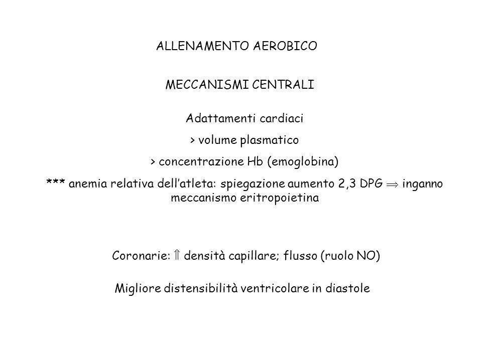 ALLENAMENTO AEROBICO MECCANISMI CENTRALI Adattamenti cardiaci > volume plasmatico > concentrazione Hb (emoglobina) *** anemia relativa dellatleta: spi