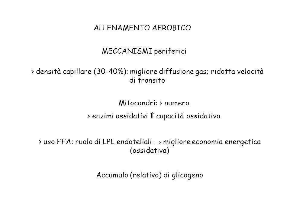 ALLENAMENTO AEROBICO MECCANISMI periferici > densità capillare (30-40%): migliore diffusione gas; ridotta velocità di transito Mitocondri: > numero >