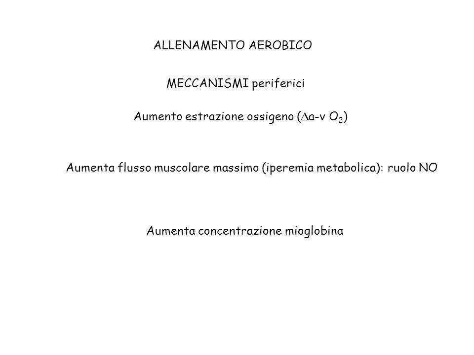 ALLENAMENTO AEROBICO MECCANISMI periferici Aumento estrazione ossigeno ( a-v O 2 ) Aumenta flusso muscolare massimo (iperemia metabolica): ruolo NO Au