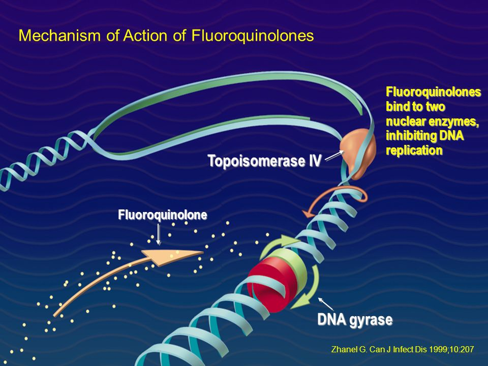 Mechanism of Action of Fluoroquinolones Zhanel G. Can J Infect Dis 1999;10:207 Fluoroquinolones bind to two nuclear enzymes, inhibiting DNA replicatio