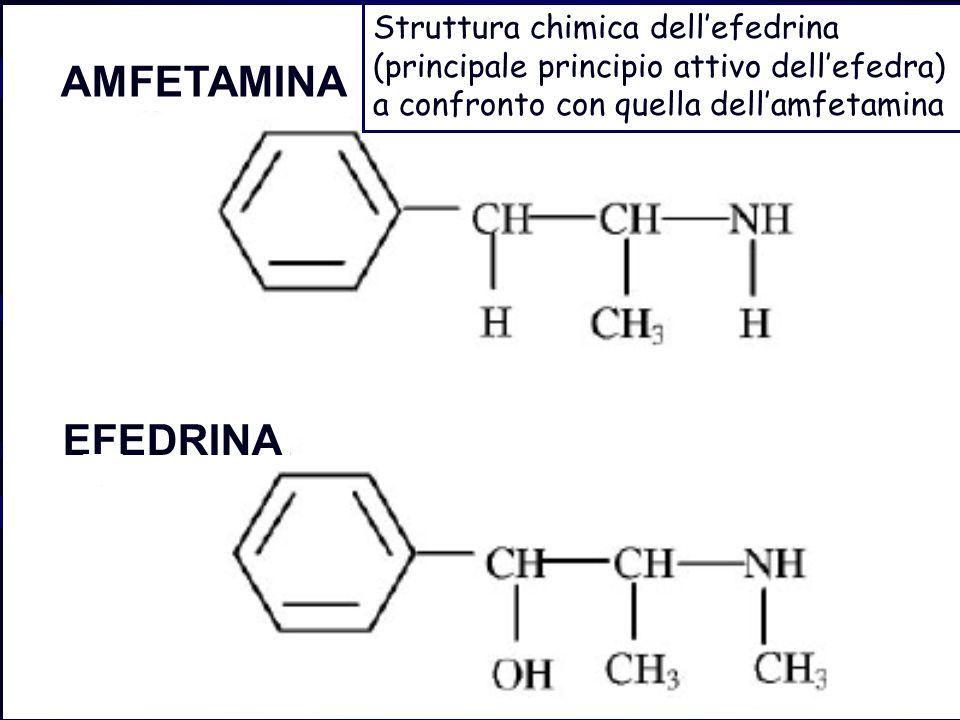 EFEDRINA AMFETAMINA Struttura chimica dellefedrina (principale principio attivo dellefedra) a confronto con quella dellamfetamina