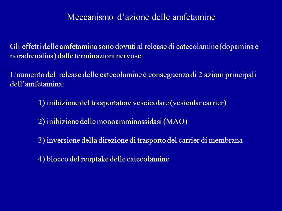 Meccanismo dazione delle amfetamine Gli effetti delle amfetamina sono dovuti al release di catecolamine (dopamina e noradrenalina) dalle terminazioni nervose.