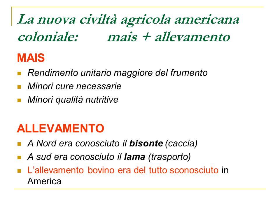 La nuova civiltà agricola americana coloniale: mais + allevamento MAIS Rendimento unitario maggiore del frumento Minori cure necessarie Minori qualità