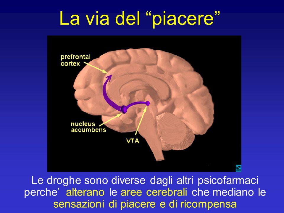 La via del piacere Le droghe sono diverse dagli altri psicofarmaci perche alterano le aree cerebrali che mediano le sensazioni di piacere e di ricompe