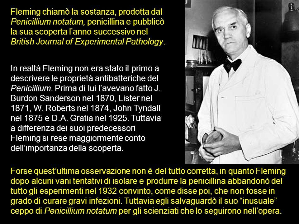 Fleming chiamò la sostanza, prodotta dal Penicillium notatum, penicillina e pubblicò la sua scoperta lanno successivo nel British Journal of Experimen