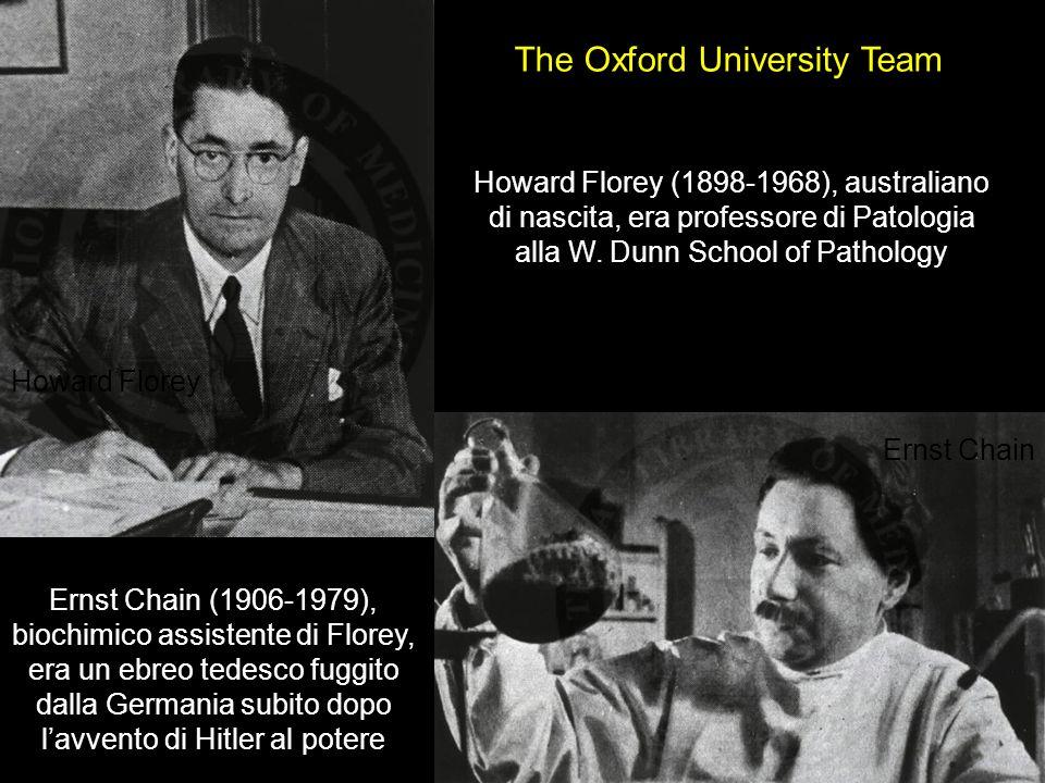 Howard Florey Ernst Chain The Oxford University Team Howard Florey (1898-1968), australiano di nascita, era professore di Patologia alla W. Dunn Schoo