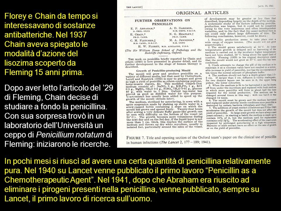 Florey e Chain da tempo si interessavano di sostanze antibatteriche. Nel 1937 Chain aveva spiegato le modalità dazione del lisozima scoperto da Flemin