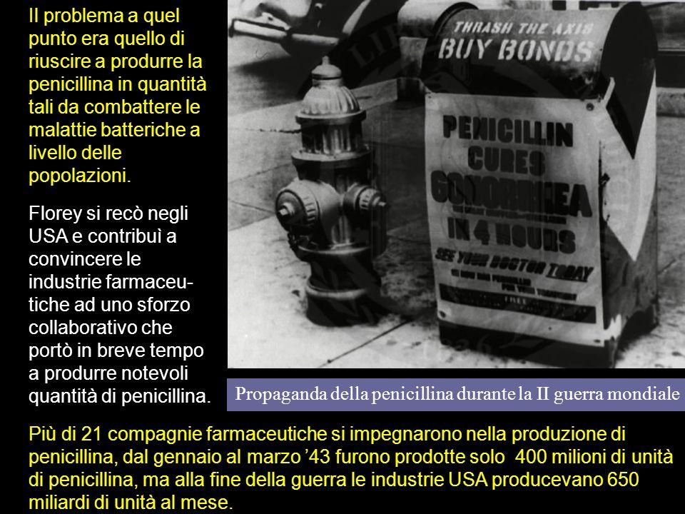 Propaganda della penicillina durante la II guerra mondiale Il problema a quel punto era quello di riuscire a produrre la penicillina in quantità tali