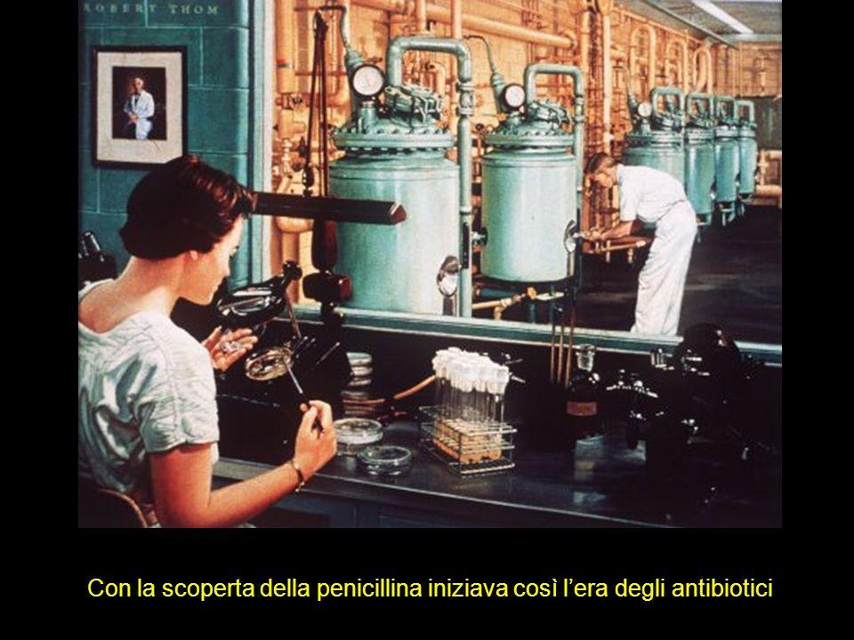 Con la scoperta della penicillina iniziava così lera degli antibiotici
