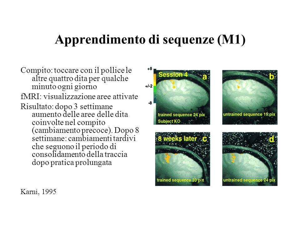 Apprendimento di sequenze (M1) Compito: toccare con il pollice le altre quattro dita per qualche minuto ogni giorno fMRI: visualizzazione aree attivat