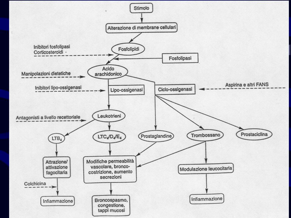 Azione antinfiammatoria : L inibizione della sintesi delle prostaglandine interferisce con il processo infiammatorio ACUTO e, in minor misura, con quello cronico.