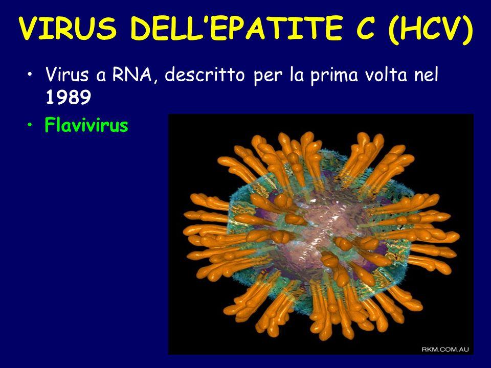VIRUS DELLEPATITE C (HCV) Virus a RNA, descritto per la prima volta nel 1989 Flavivirus