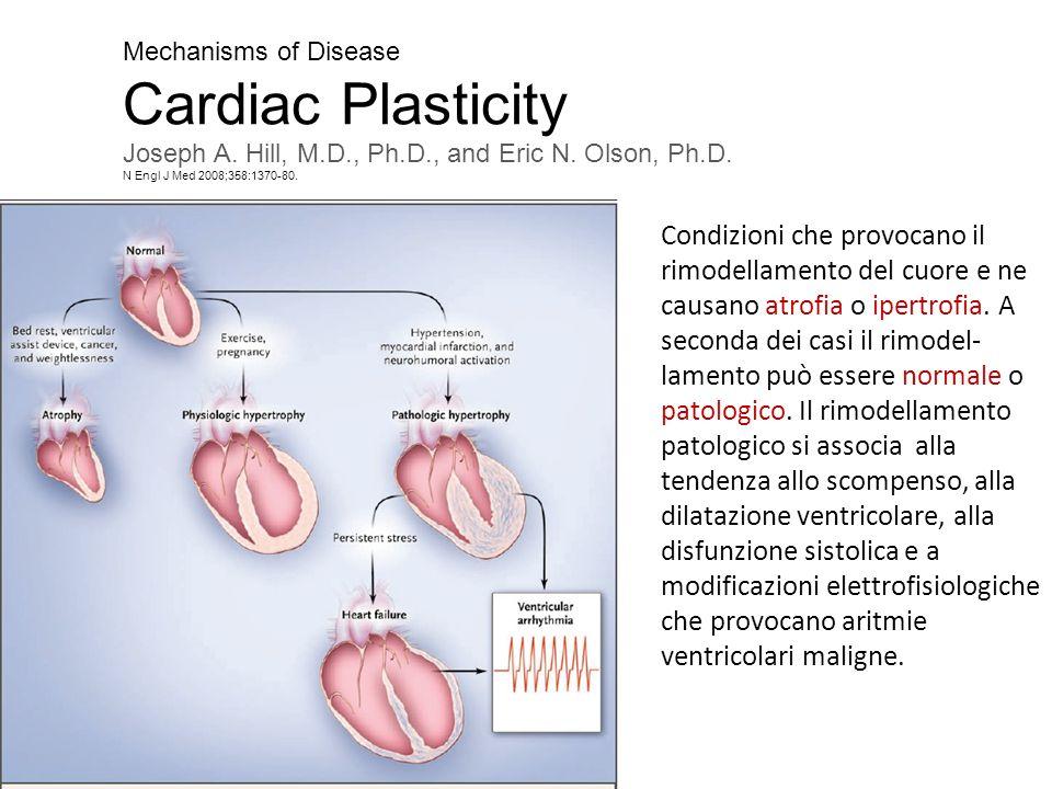 Mechanisms of Disease Cardiac Plasticity Joseph A. Hill, M.D., Ph.D., and Eric N. Olson, Ph.D. N Engl J Med 2008;358:1370-80. Condizioni che provocano