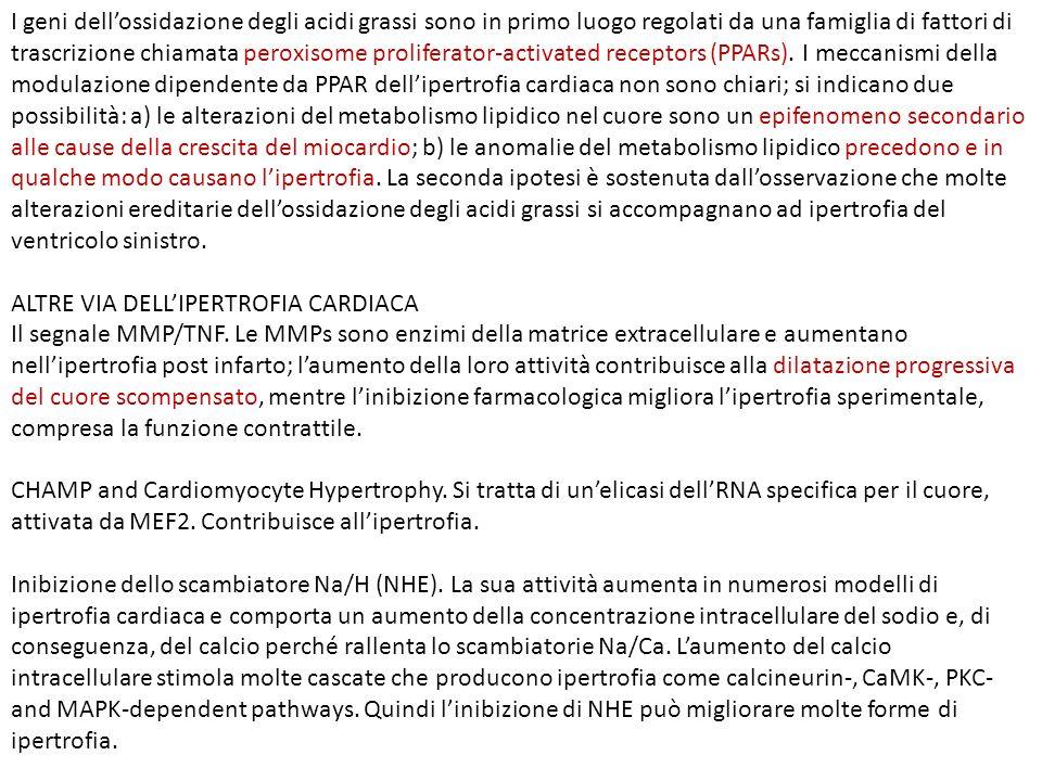 I geni dellossidazione degli acidi grassi sono in primo luogo regolati da una famiglia di fattori di trascrizione chiamata peroxisome proliferator-act