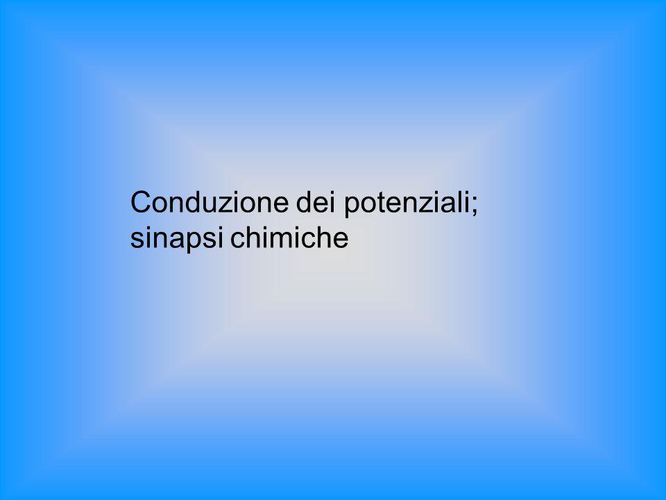Conduzione dei potenziali; sinapsi chimiche