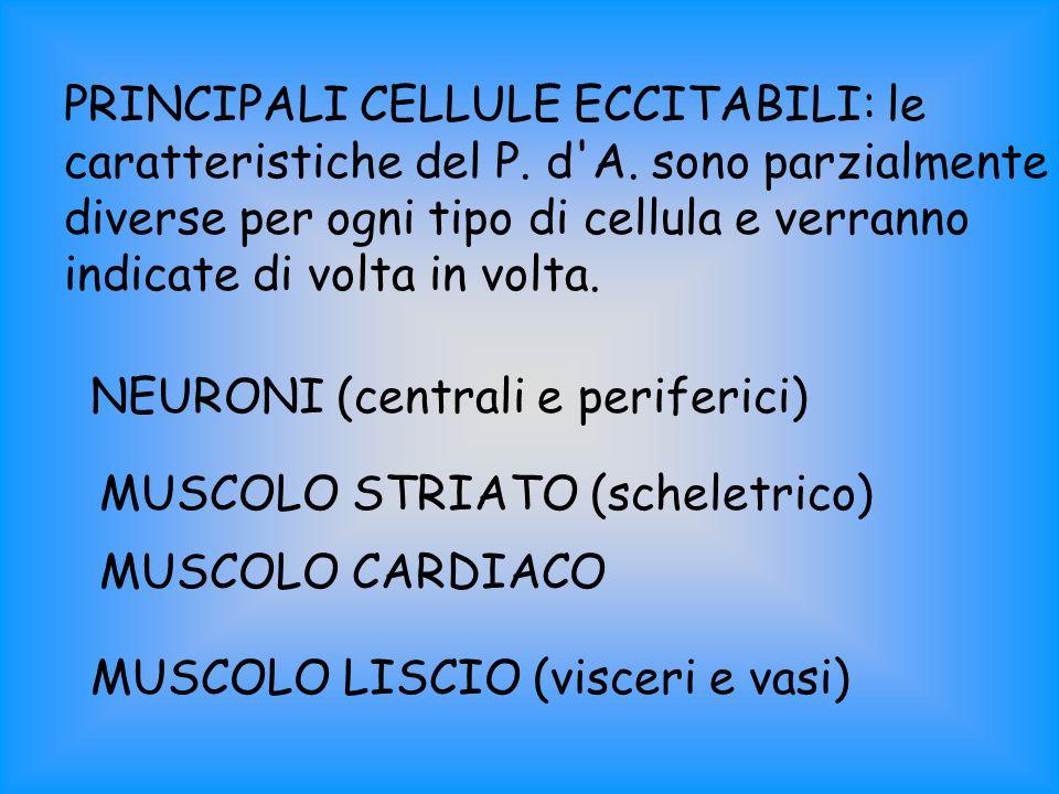 PRINCIPALI CELLULE ECCITABILI: le caratteristiche del P. d'A. sono parzialmente diverse per ogni tipo di cellula e verranno indicate di volta in volta