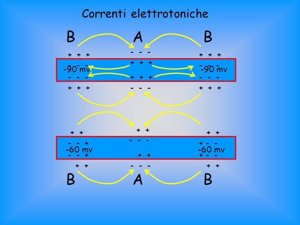 - - - + + + - - - + + + - - - + + +- - - + + + + - - - - + + + - - + + + - - - + - - - + + ABB ABB -90 mv -60 mv Correnti elettrotoniche