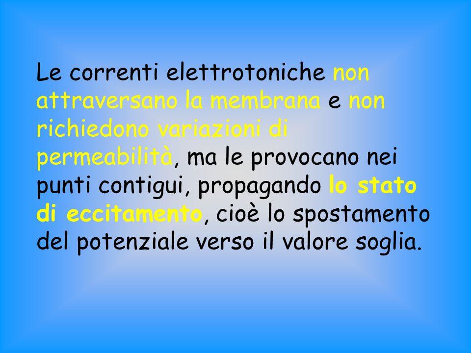 Le correnti elettrotoniche non attraversano la membrana e non richiedono variazioni di permeabilità, ma le provocano nei punti contigui, propagando lo