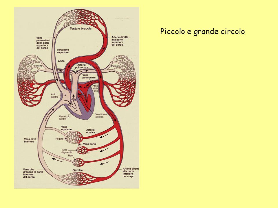 DEFINIZIONI Gittata cardiaca = frequenza cardiaca x gettata sistolica La gittata cardiaca può essere calcolata anche tramite il principio di Fick in base al quale la GC è data dal rapporto tra il consumo di ossigeno (VO2) e la differenza artero-venosa dellossigeno (Δa-v): GC= VO2/ (Δa-v)