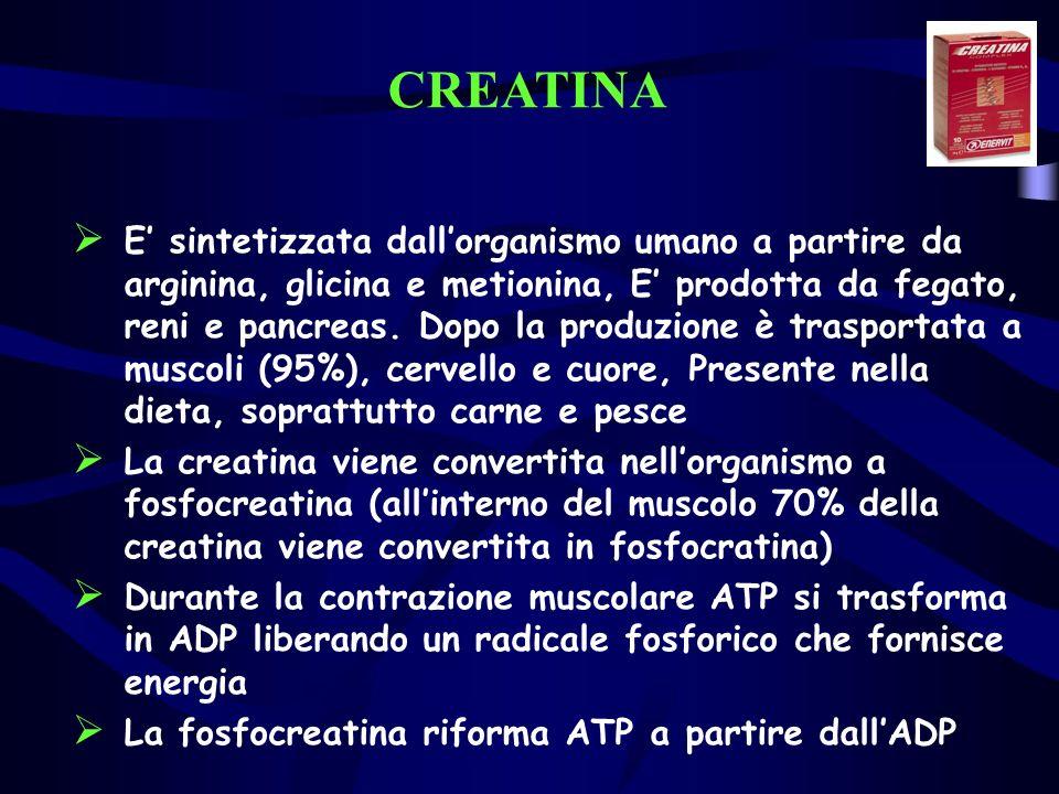 CREATINA E sintetizzata dallorganismo umano a partire da arginina, glicina e metionina, E prodotta da fegato, reni e pancreas. Dopo la produzione è tr