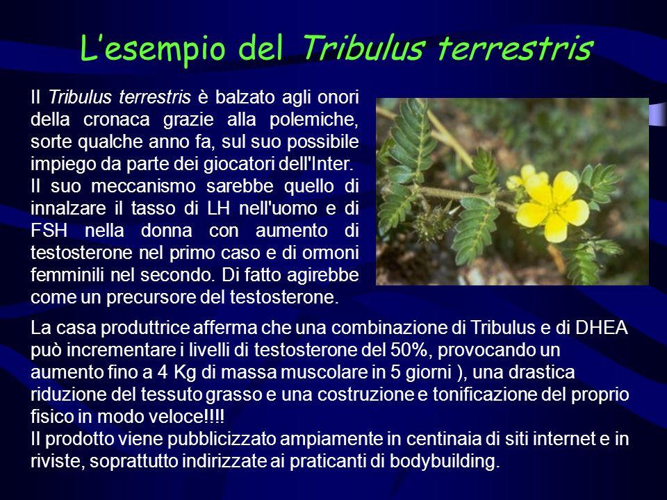 Il Tribulus terrestris è balzato agli onori della cronaca grazie alla polemiche, sorte qualche anno fa, sul suo possibile impiego da parte dei giocato
