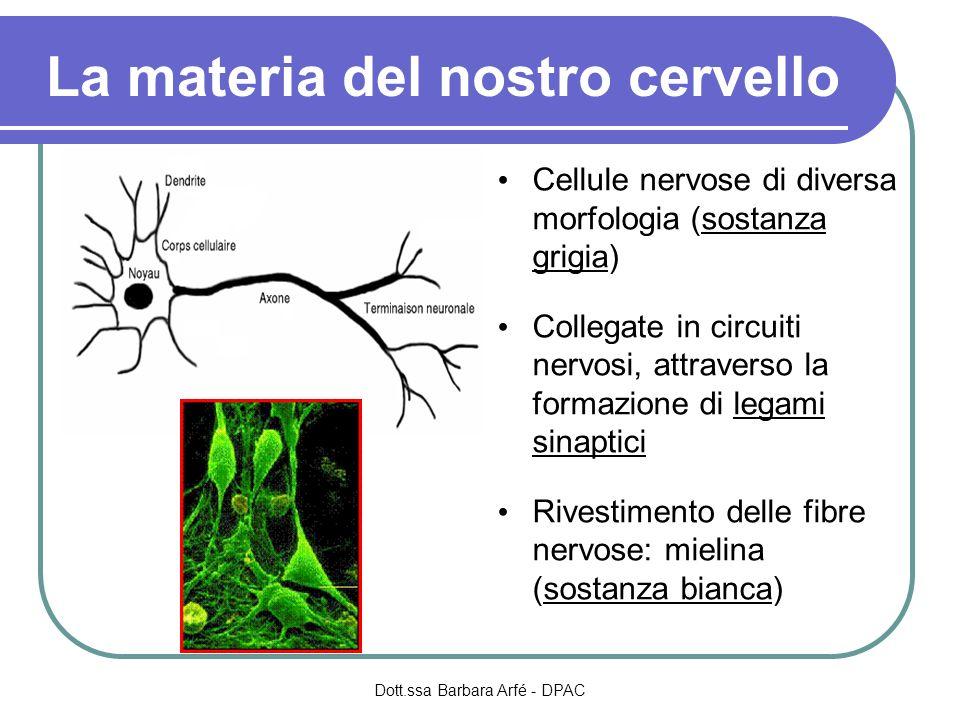 La materia del nostro cervello Cellule nervose di diversa morfologia (sostanza grigia) Collegate in circuiti nervosi, attraverso la formazione di legami sinaptici Rivestimento delle fibre nervose: mielina (sostanza bianca) Dott.ssa Barbara Arfé - DPAC