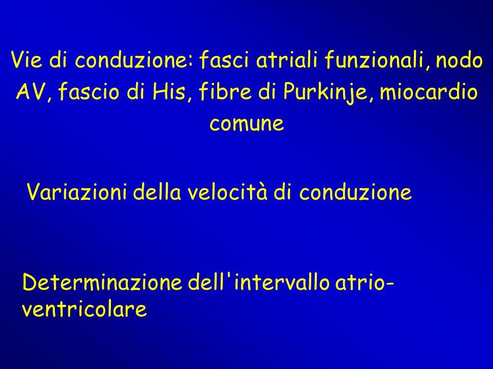 Vie di conduzione: fasci atriali funzionali, nodo AV, fascio di His, fibre di Purkinje, miocardio comune Variazioni della velocità di conduzione Deter
