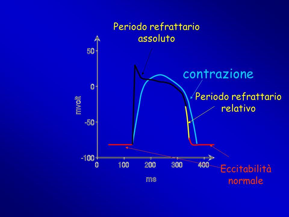 contrazione Periodo refrattario relativo Periodo refrattario assoluto Eccitabilità normale