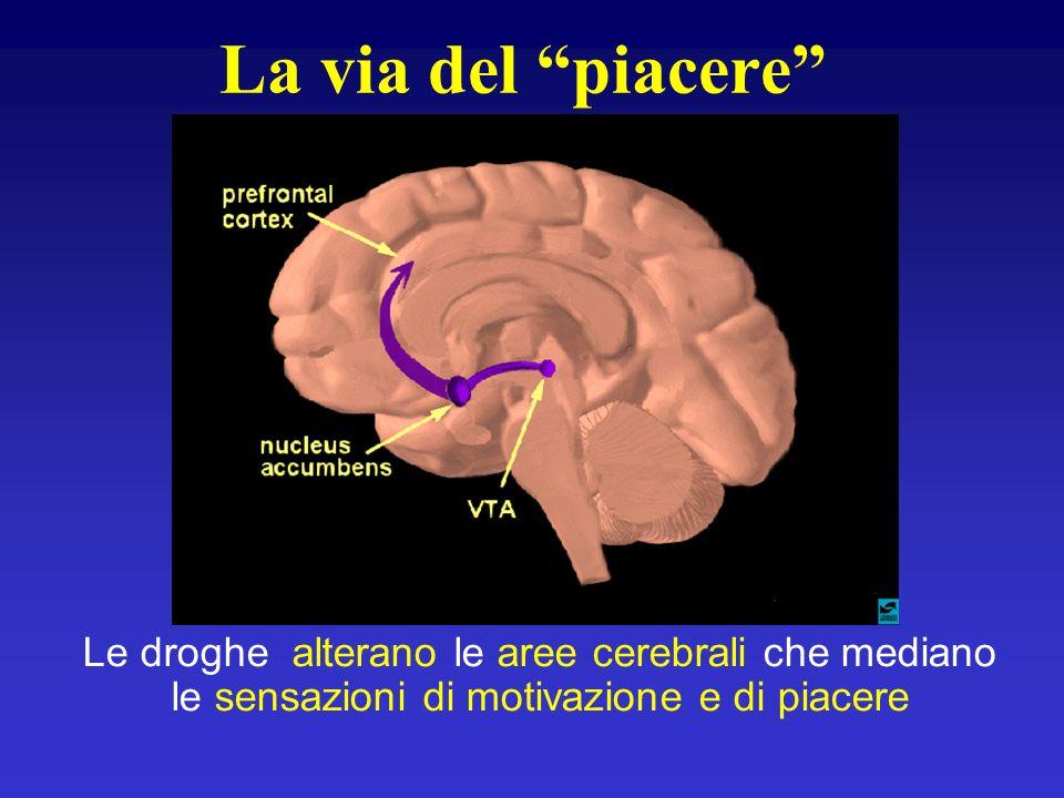 La via del piacere Le droghe alterano le aree cerebrali che mediano le sensazioni di motivazione e di piacere
