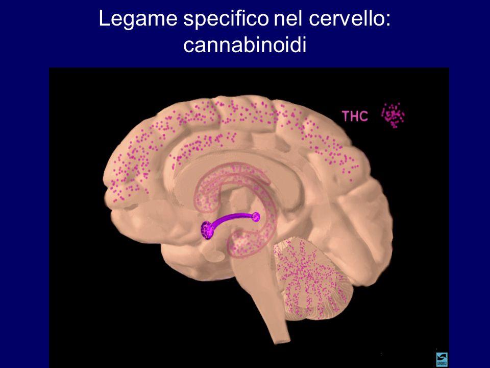 Legame specifico nel cervello: cannabinoidi