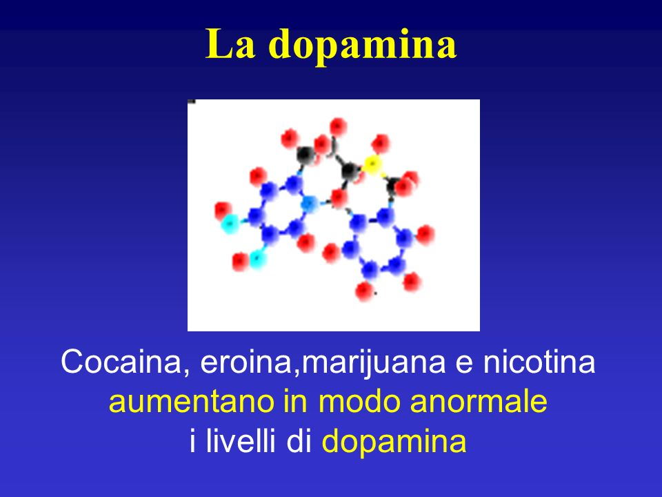 La dopamina Cocaina, eroina,marijuana e nicotina aumentano in modo anormale i livelli di dopamina