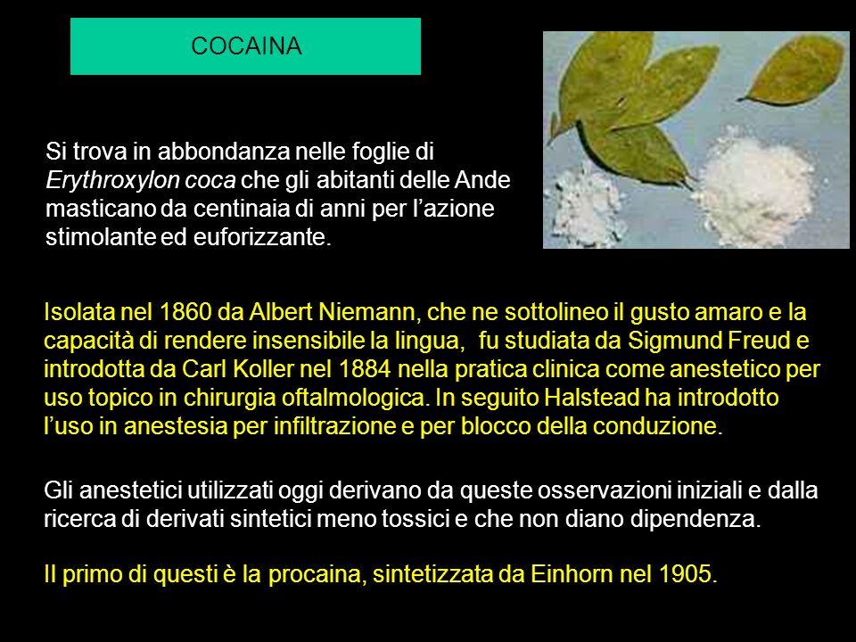 COCAINA Si trova in abbondanza nelle foglie di Erythroxylon coca che gli abitanti delle Ande masticano da centinaia di anni per lazione stimolante ed