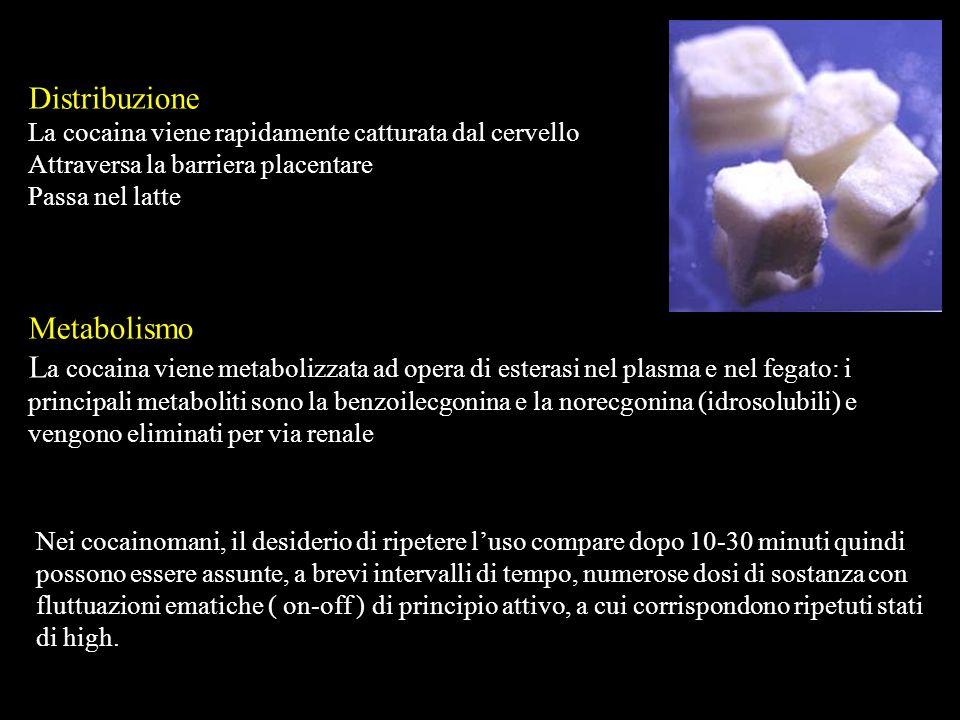 Distribuzione La cocaina viene rapidamente catturata dal cervello Attraversa la barriera placentare Passa nel latte Metabolismo L a cocaina viene meta