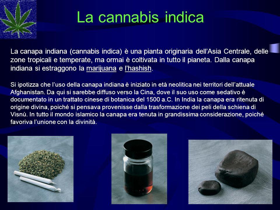 La cannabis indica La canapa indiana (cannabis indica) è una pianta originaria dellAsia Centrale, delle zone tropicali e temperate, ma ormai è coltiva