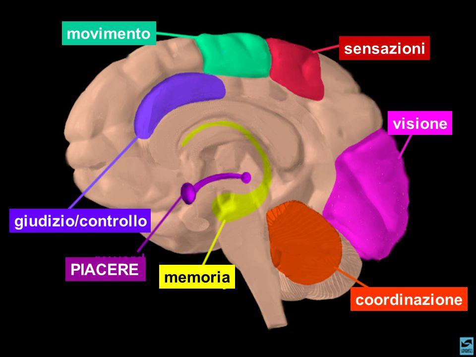 visione sensazioni coordinazione memoria movimento giudizio/controllo PIACERE