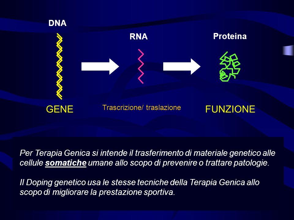 Ingegneria genetica / tecniche di manipolazione Segmenti specifici di DNA possono essere tagliati e isolati I segmenti isolati si possono ricombinare con un vettore plasmidico Il plasmide è trasferito in un batterio dove viene moltiplicato Il DNA ricombinato può essere ricombinato ulteriormente per ottenere la molecola finale desiderata La molecola finale è trasferita nelle cellule o nellorganismo