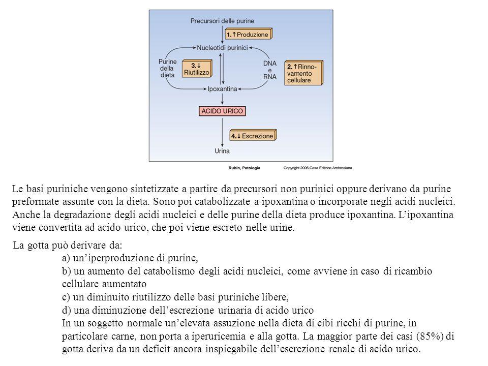 Le basi puriniche vengono sintetizzate a partire da precursori non purinici oppure derivano da purine preformate assunte con la dieta.
