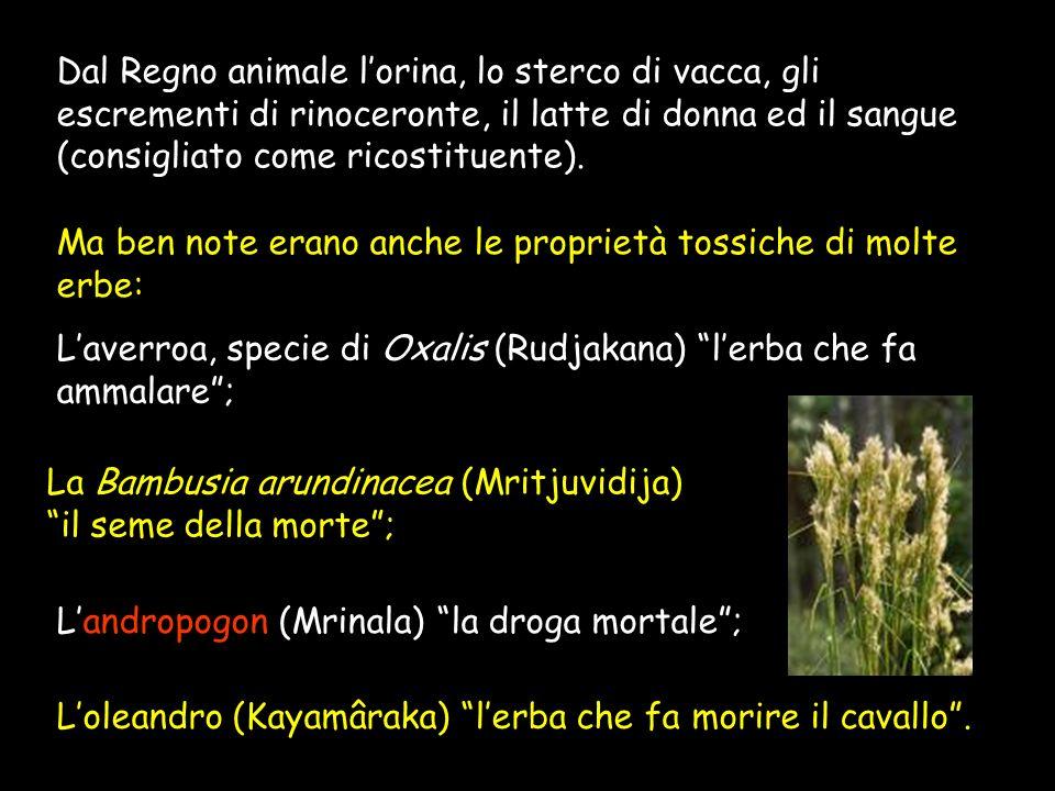 Per indurre il vomito si usavano infusioni di Melia indica (Tchhardana) o di Calotropis gigantea (Vantidâ); Come inebrianti e narcotici si utilizzavan