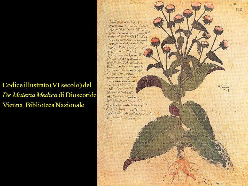 Nellantica Roma la farmacologia prosegue la tradizione greca. Aulo Cornelio Celso (famoso chirurgo del I secolo d.C., foto a fianco), Scribonio e Plin