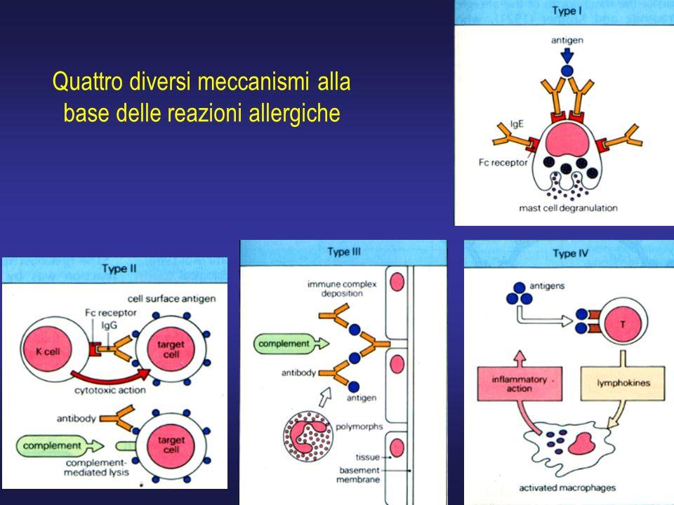 13 Quattro diversi meccanismi alla base delle reazioni allergiche