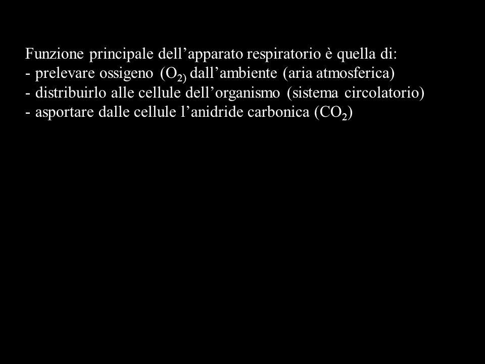 Funzione principale dellapparato respiratorio è quella di: -prelevare ossigeno (O 2) dallambiente (aria atmosferica) -distribuirlo alle cellule dellorganismo (sistema circolatorio) -asportare dalle cellule lanidride carbonica (CO 2 )