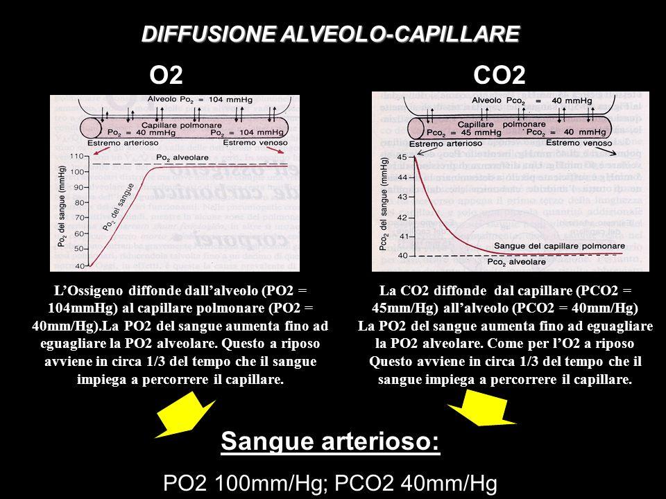 DIFFUSIONE ALVEOLO-CAPILLARE La CO2 diffonde dal capillare (PCO2 = 45mm/Hg) allalveolo (PCO2 = 40mm/Hg) La PO2 del sangue aumenta fino ad eguagliare la PO2 alveolare.