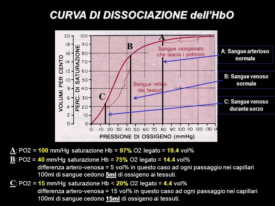 EFFETTO BOHR Fattori che possono spostare a destra la curva di dissociazione dellHbO: 1) >PCO2: 2) H + ); 3) > temperatura; 4) > 2.3 DPG; Durante attività fisica I muscoli in attività liberano CO2 e cataboliti acidi facendo aumentare la concentrazione di H + e diminuendo il PH.